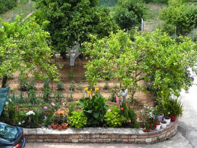 De tuin met citroenbomen